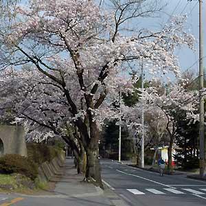 miyota2.jpg