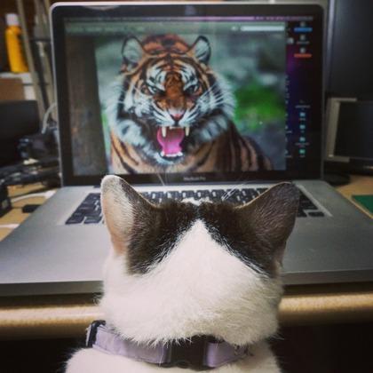 ぽけこ&タイガー