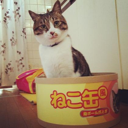 のん太郎缶詰
