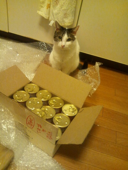 缶pokeko&猫