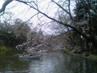 20060326sakura.jpg
