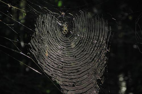 蜘蛛の糸4
