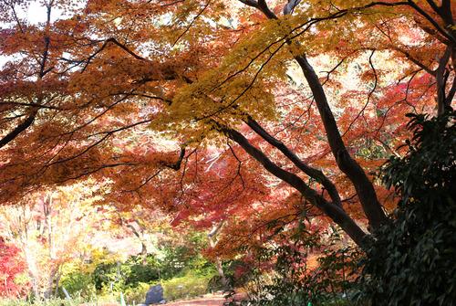 東山植物園