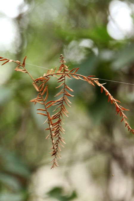 蜘蛛の糸3