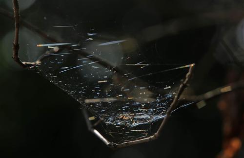 クモの巣1