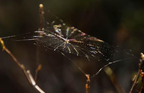 蜘蛛の糸5