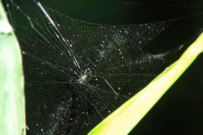 蜘蛛 : Fukko photo