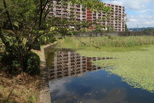 瀬戸市文化センターの池