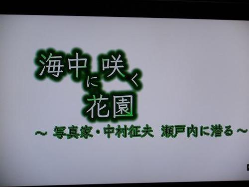(周防大島ニホンアワサンゴ)撮影平成25年1月25日 012