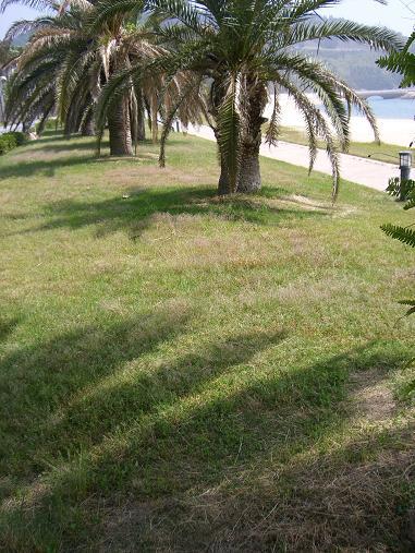 img20100126_4.jpg