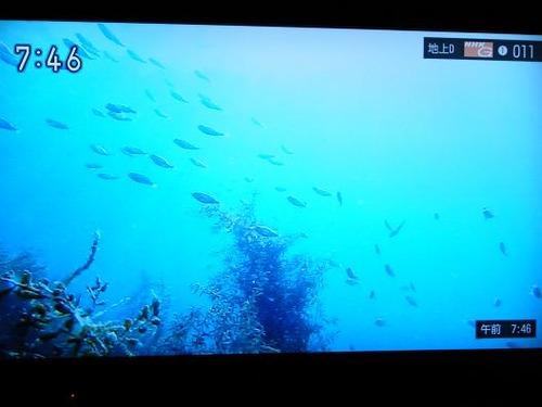 テレビ平成25年5月26日 028
