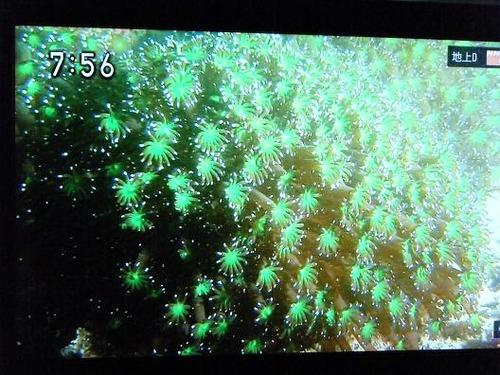 テレビ平成25年5月26日 055
