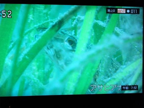 テレビ平成25年5月26日 048