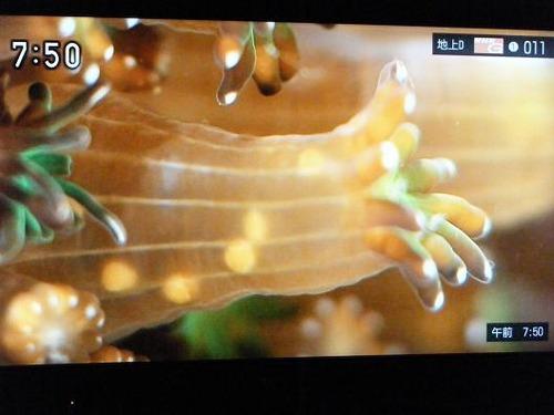 テレビ平成25年5月26日 039