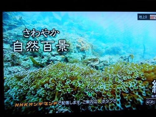 テレビ平成25年5月26日 065