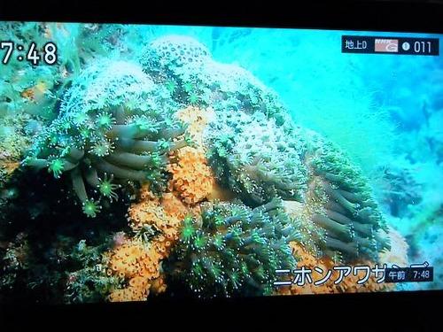 テレビ平成25年5月26日 034