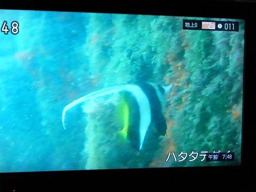 テレビ平成25年5月26日 032