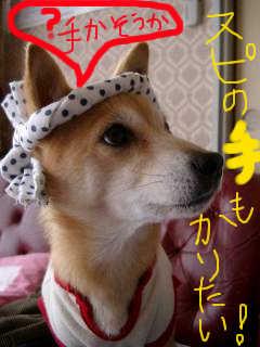 hatimaki_1.jpg