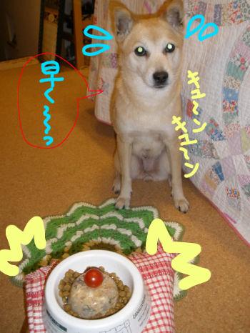 09spi9sai1.jpg