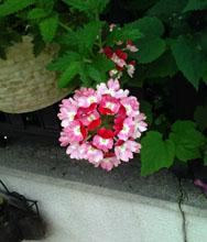 09flower03.jpg