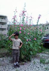 tallflower_m.jpg