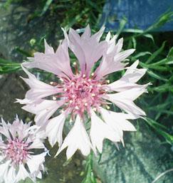 08flower01b.jpg