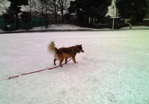 snow2008m.jpg