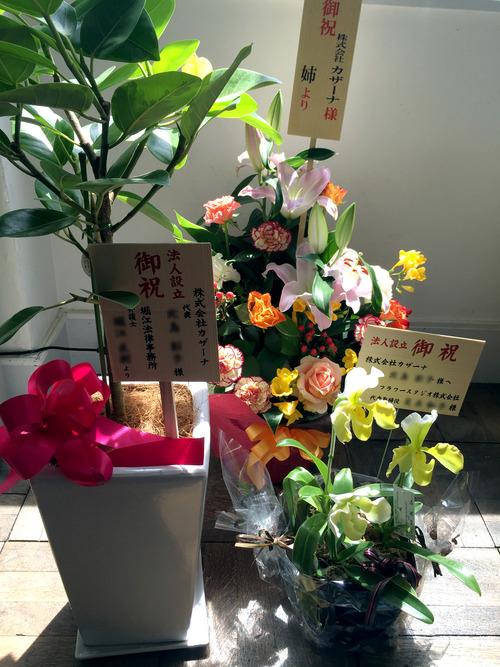 20160415flower