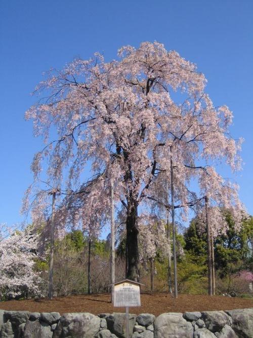 京都 東寺 043