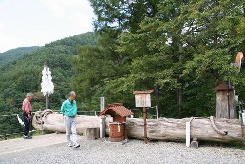 IMG_2572 長さ20m、重さ10トンのモミの木