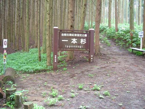 DSCF1998 2時間20分で一本杉(鏡の宿)に到着