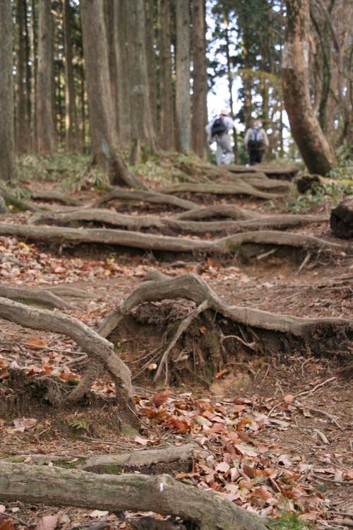 IMG_1320 木の根が面白い