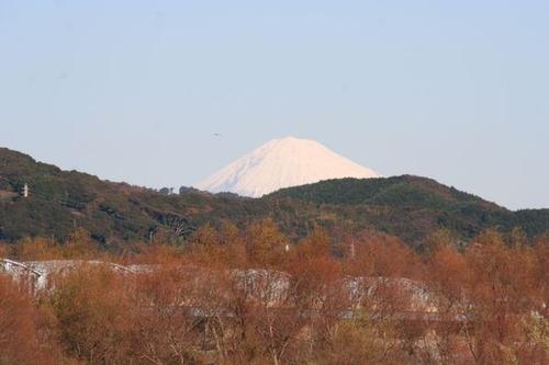 IMG_6709 大井川の堤防から富士山が見える