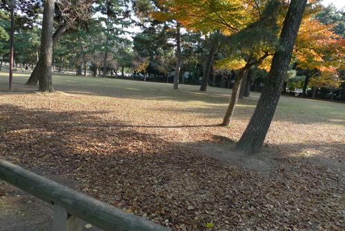 1129063 奈良公園
