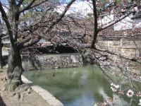 IMG_桜倉敷20001