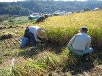 IMG稲刈り10001