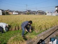 IMG稲刈り0001