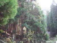 IMG杉30001