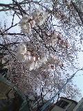 おーい春だよー。