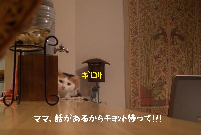img20080117_3.jpg