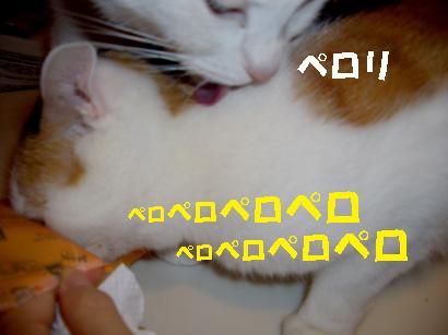 img20071203_2.jpg