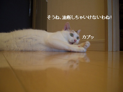 img20080312_5.jpg