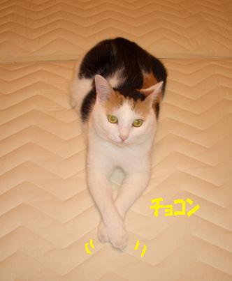 img20071019_4.jpg