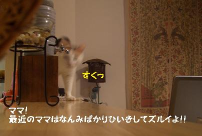 img20080117_4.jpg