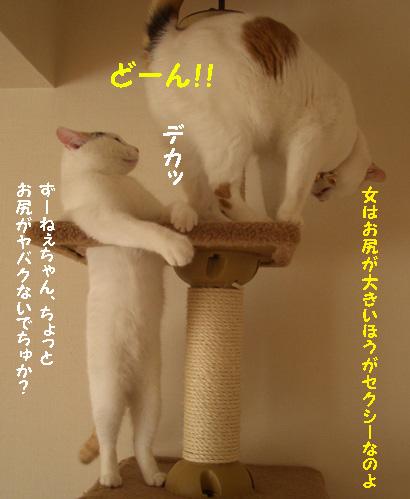 img20080126_4.jpg