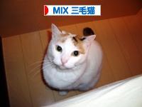 にほんブログ村 三毛猫ブログへ