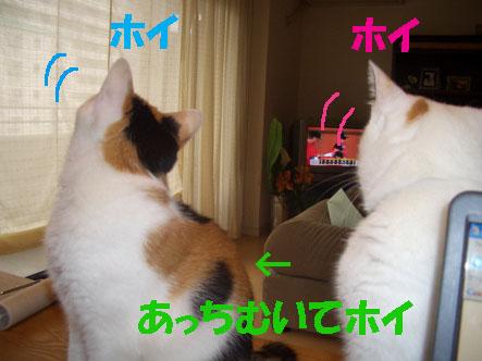 img20070929_1.jpg