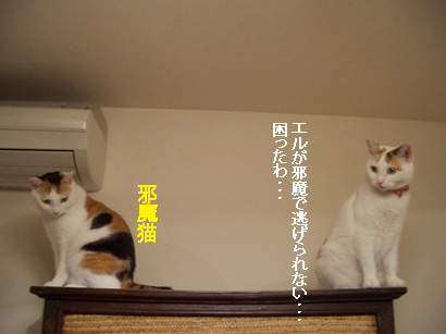 img20080311_4.jpg