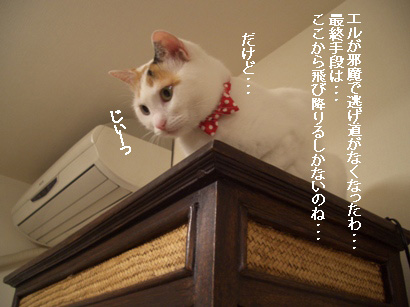 img20080311_5.jpg