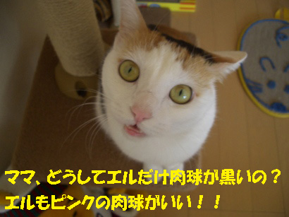 img20071229_3.jpg